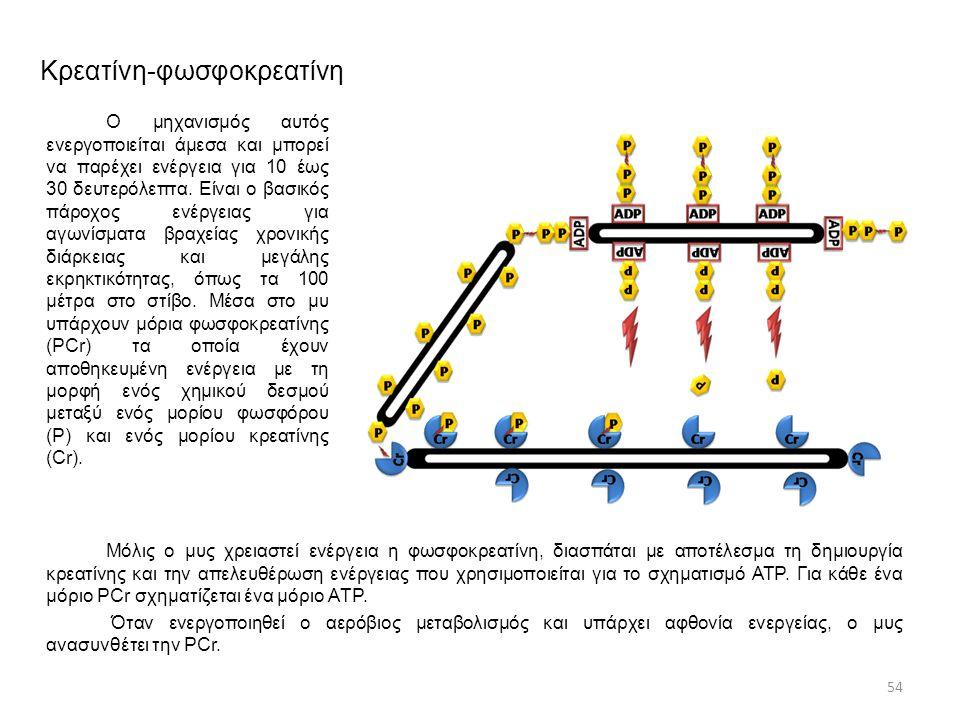 Κρεατίνη-φωσφοκρεατίνη Ο μηχανισμός αυτός ενεργοποιείται άμεσα και μπορεί να παρέχει ενέργεια για 10 έως 30 δευτερόλεπτα. Είναι ο βασικός πάροχος ενέρ