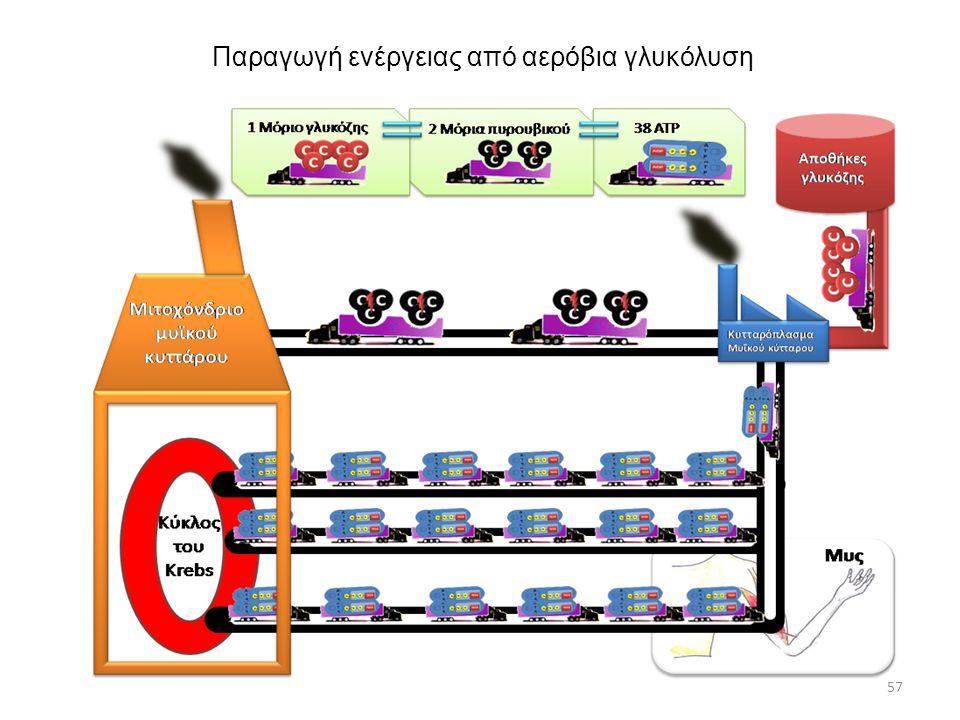Παραγωγή ενέργειας από αερόβια γλυκόλυση 57