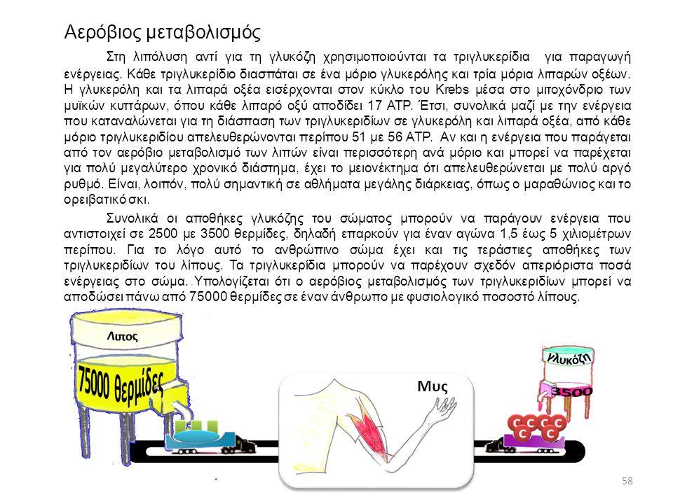Αερόβιος μεταβολισμός Στη λιπόλυση αντί για τη γλυκόζη χρησιμοποιούνται τα τριγλυκερίδια για παραγωγή ενέργειας. Κάθε τριγλυκερίδιο διασπάται σε ένα μ