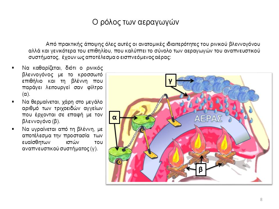 Φάσεις της αναπνοής Η αναπνοή χωρίζεται σε δύο φάσεις:  Εκπνοή : εξαγωγή του αέρα από τις κυψελίδες προς το περιβάλλον.