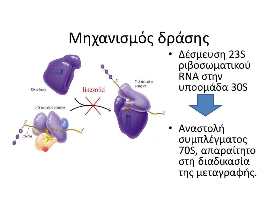 Μηχανισμός δράσης Δέσμευση 23S ριβοσωματικού RNA στην υποομάδα 30S Αναστολή συμπλέγματος 70S, απαραίτητο στη διαδικασία της μεταγραφής.