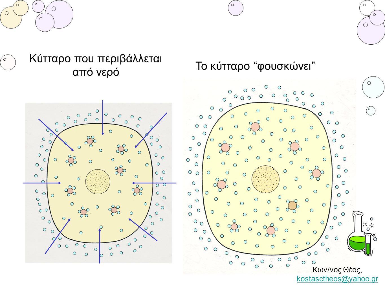 """Κύτταρο που περιβάλλεται από νερό Το κύτταρο """"φουσκώνει"""" Κων/νος Θέος, kostasctheos@yahoo.gr kostasctheos@yahoo.gr"""