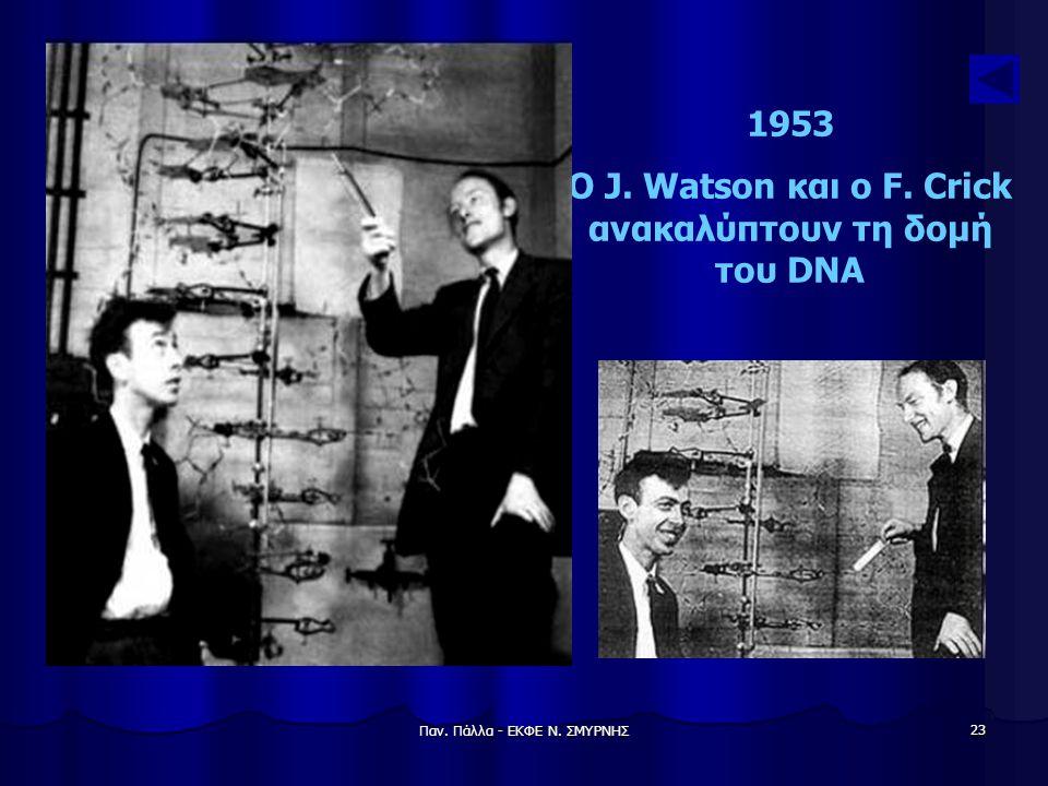 Παν. Πάλλα - ΕΚΦΕ Ν. ΣΜΥΡΝΗΣ 23 1953 Ο J. Watson και ο F. Crick ανακαλύπτουν τη δομή του DNA