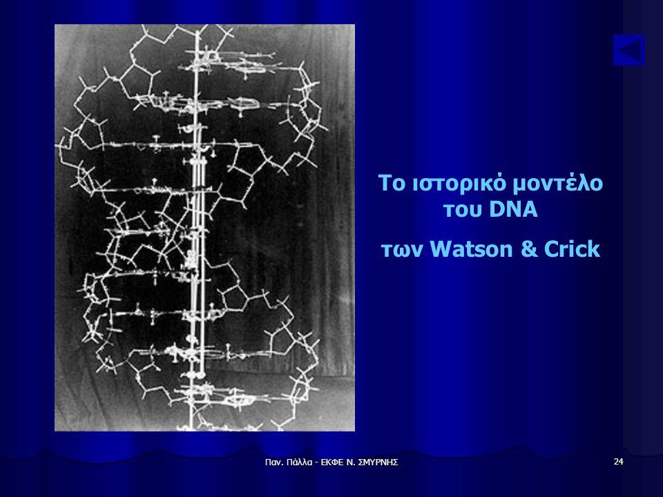 Παν. Πάλλα - ΕΚΦΕ Ν. ΣΜΥΡΝΗΣ 24 Το ιστορικό μοντέλο του DNA των Watson & Crick