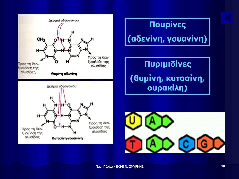 Παν. Πάλλα - ΕΚΦΕ Ν. ΣΜΥΡΝΗΣ 28 Πουρίνες (αδενίνη, γουανίνη) Πυριμιδίνες (θυμίνη, κυτοσίνη, ουρακίλη)