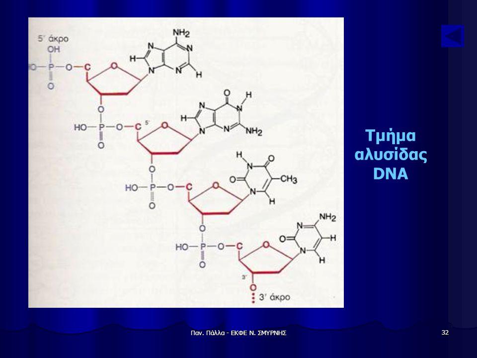 Παν. Πάλλα - ΕΚΦΕ Ν. ΣΜΥΡΝΗΣ 32 Τμήμα αλυσίδας DNA