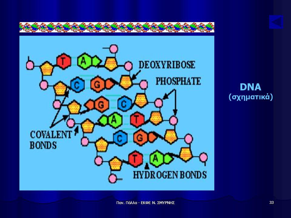 Παν. Πάλλα - ΕΚΦΕ Ν. ΣΜΥΡΝΗΣ 33 DNA (σχηματικά)