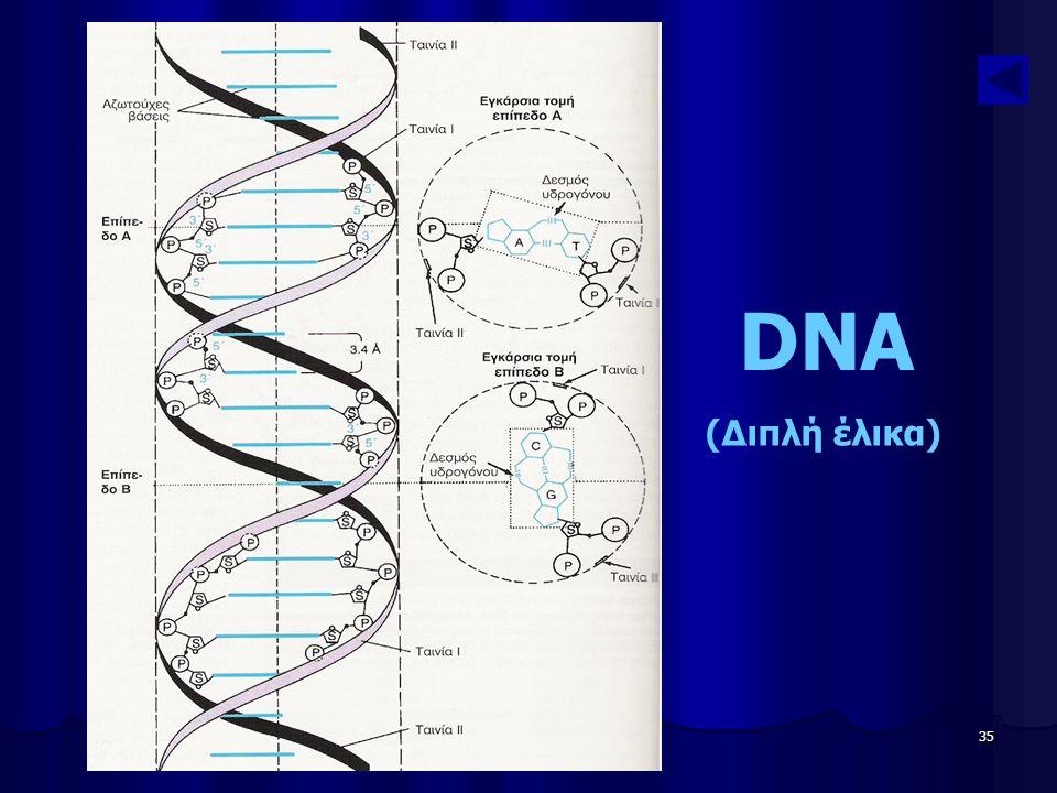 Παν. Πάλλα - ΕΚΦΕ Ν. ΣΜΥΡΝΗΣ 35 DNA (Διπλή έλικα)