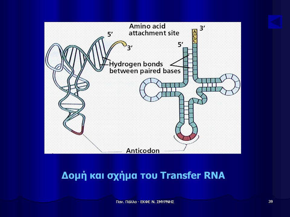 Παν. Πάλλα - ΕΚΦΕ Ν. ΣΜΥΡΝΗΣ 39 Δομή και σχήμα του Transfer RNA