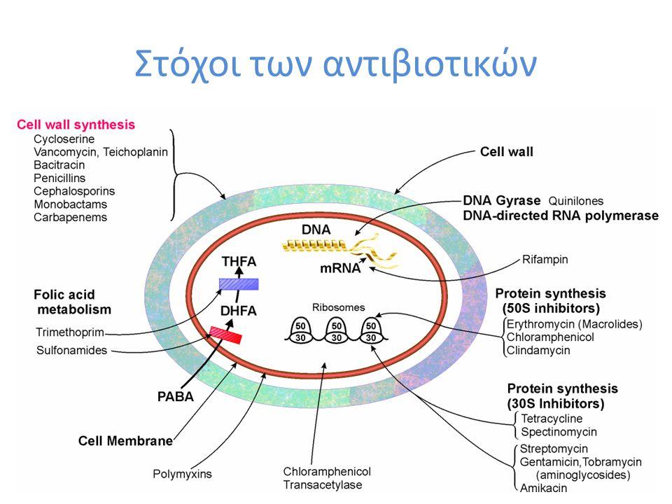 Στόχοι των αντιβιοτικών