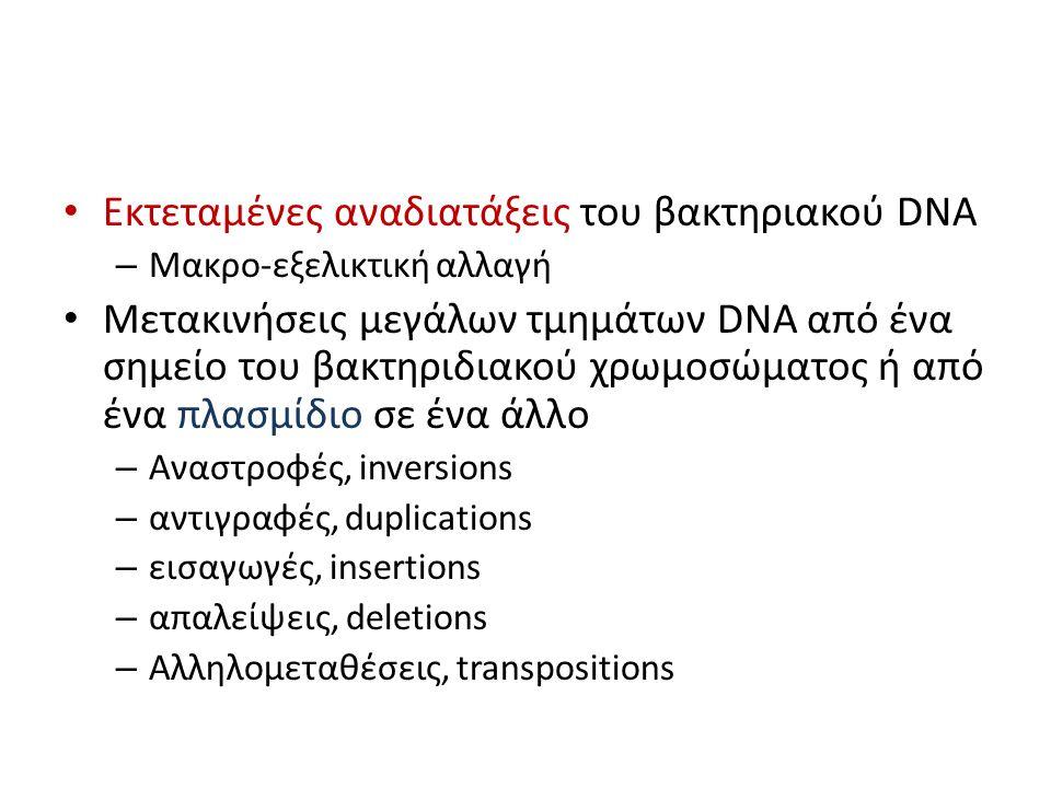Εκτεταμένες αναδιατάξεις του βακτηριακού DNA – Μακρο-εξελικτική αλλαγή Μετακινήσεις μεγάλων τμημάτων DNA από ένα σημείο του βακτηριδιακού χρωμοσώματος