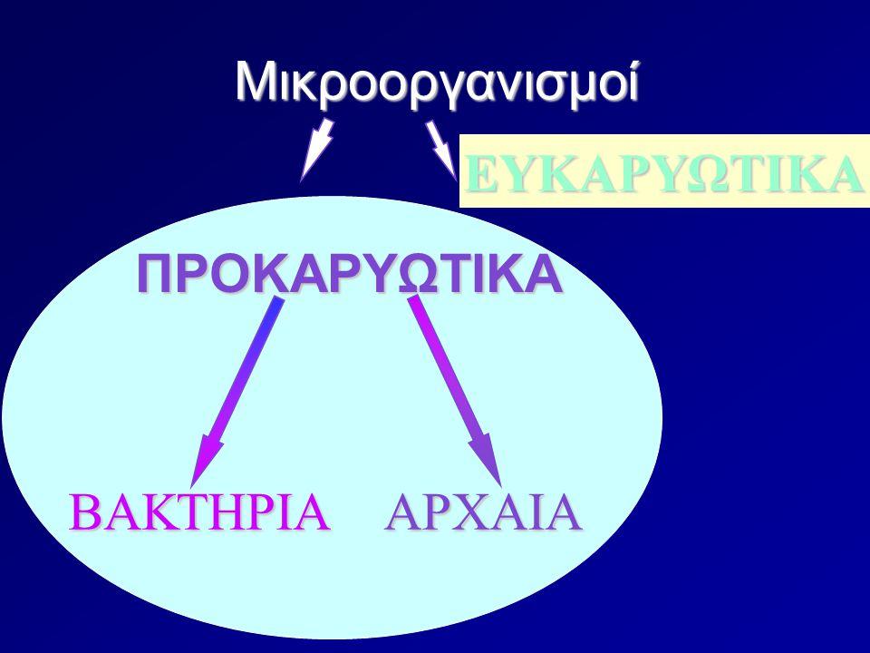 Διαφορές προκαρυωτικών – ευκαρυωτικών Χωρίς διαμερίσματα Οι κυτταρικές μεμβράνες δεν έχουν στερόλες (π.χ.