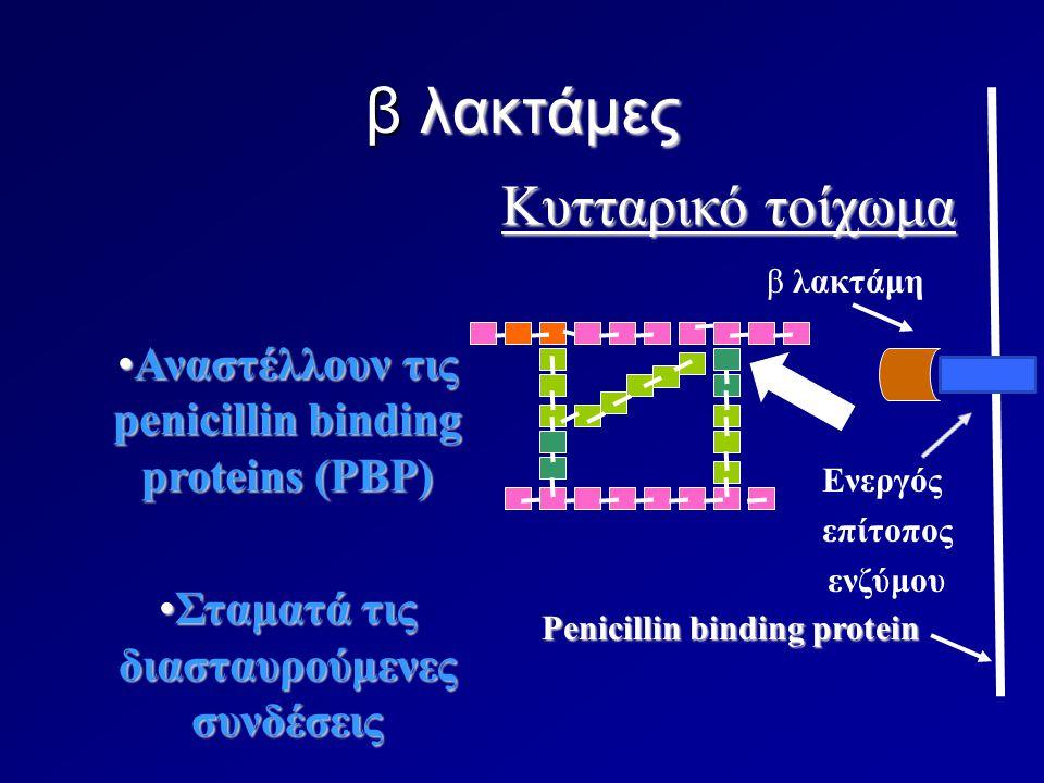 β λακτάμες Κυτταρικό τοίχωμα Penicillin binding protein Αναστέλλουν τις penicillin binding proteins (PBP)Αναστέλλουν τις penicillin binding proteins (