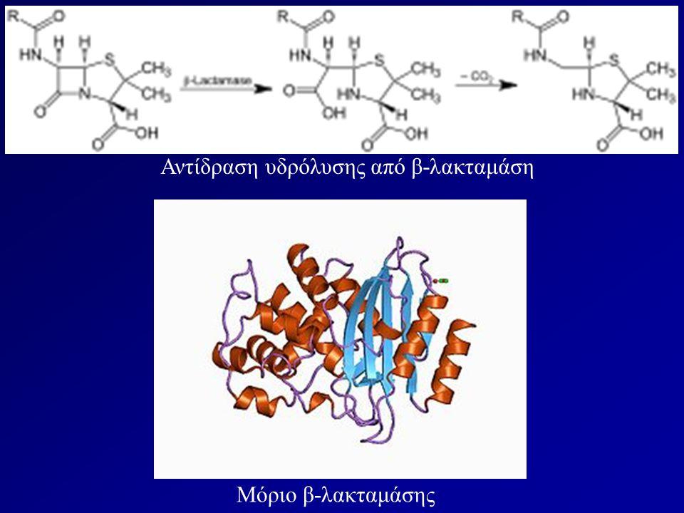 Μόριο β-λακταμάσης Αντίδραση υδρόλυσης από β-λακταμάση