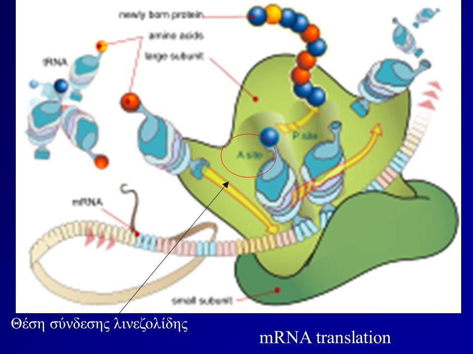 mRNA translation Θέση σύνδεσης λινεζολίδης