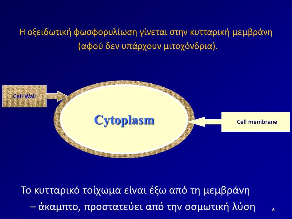 6 Cytoplasm Η οξειδωτική φωσφορυλίωση γίνεται στην κυτταρική μεμβράνη (αφού δεν υπάρχουν μιτοχόνδρια). Cell membrane Το κυτταρικό τοίχωμα είναι έξω απ