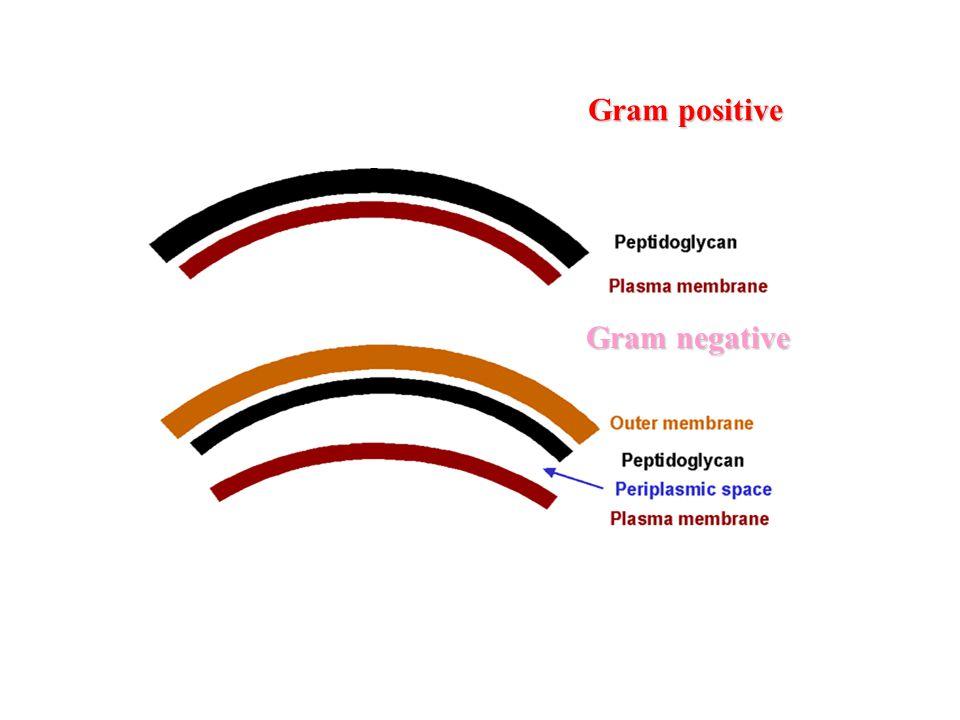 Gram positive Gram negative