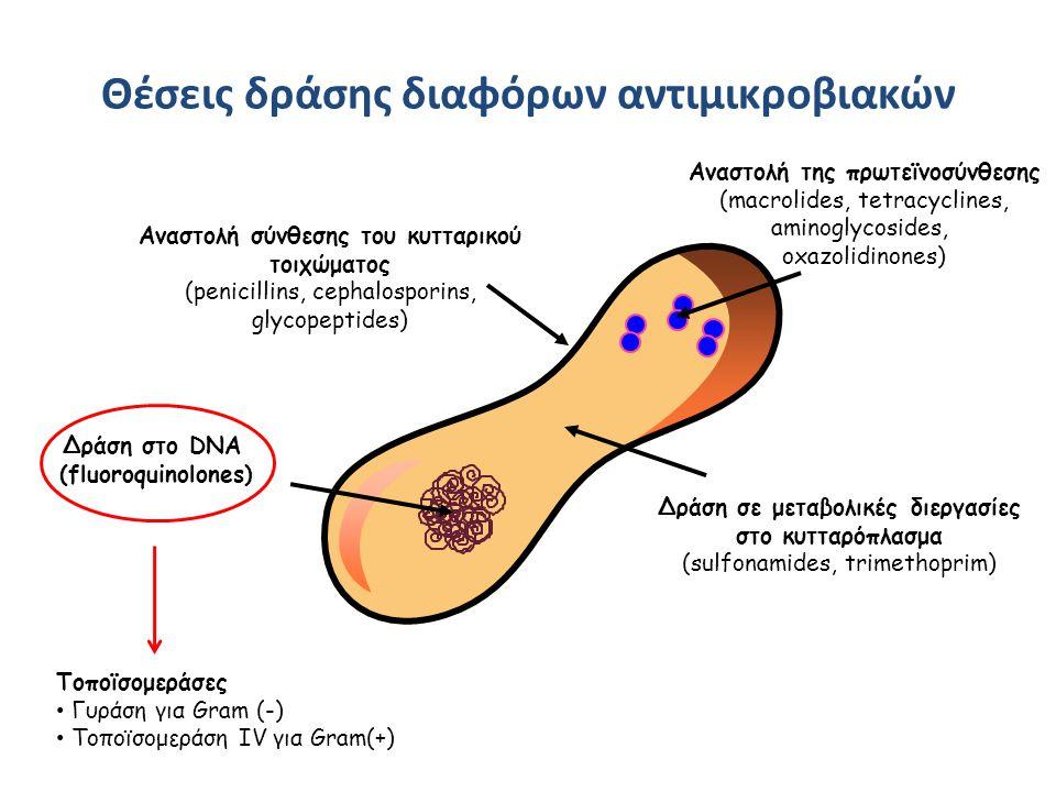 Φαρμακοκινητικές ιδιότητες φθοριοκινολονών ΚινολόνηΔόσηCmax μg/ml T ½ (h) Βιοδιαθεσιμότητα (%) Νεφρική κάθαρση Nορφλοξασίνη400 po 1.53.350234 Σιπροφλοξασίνη500 po 400 IV 2.4 4.6 4 5-6 70358 300 Οφλοξασίνη400 po 400 IV 4.6 5.5 4-5 6 >95195 190 Λεβοφλοξασίνη500 po 500 IV 5.7 6.4 6-8 99116 94 Μοξιφλοξασίνη400 po 400 IV 4.5 4.4 11-12 8-15 8843 - Eur J Clin Microbiol Infect 2003;22:203 και Antimicrob Agents Chemother 2000;44:2600