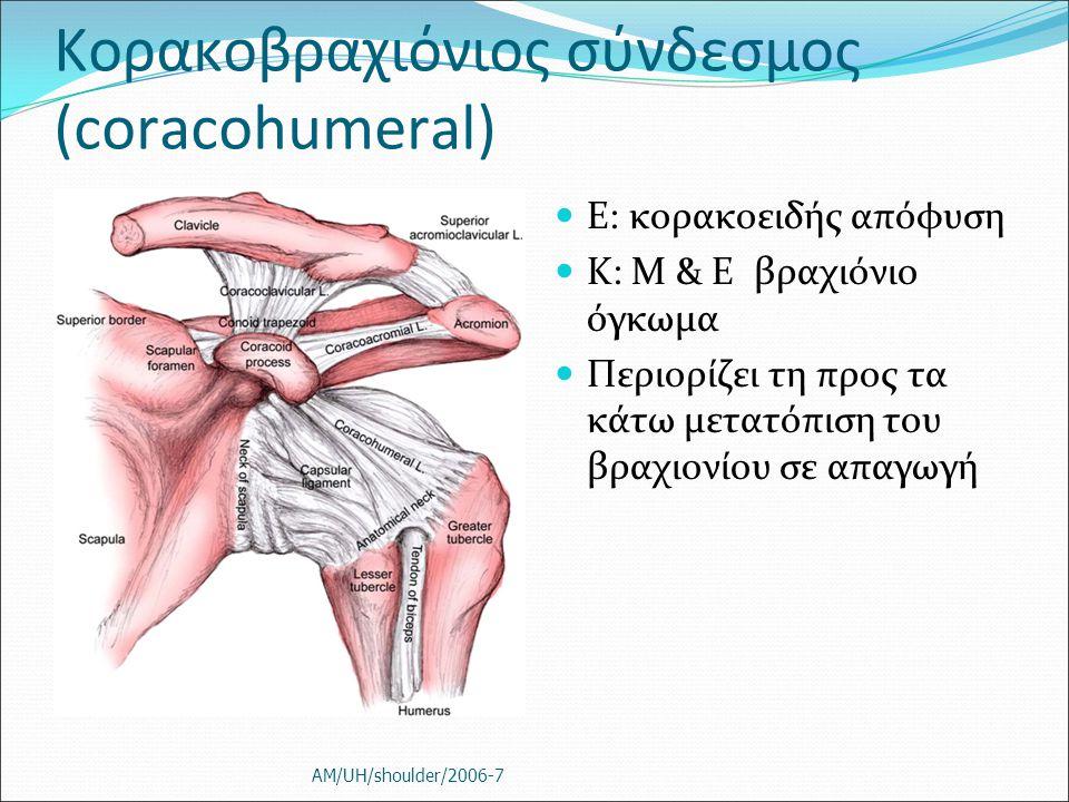 Κορακοβραχιόνιος σύνδεσμος (coracohumeral) E: κορακοειδής απόφυση Κ: M & Ε βραχιόνιο όγκωμα Περιορίζει τη προς τα κάτω μετατόπιση του βραχιονίου σε απ