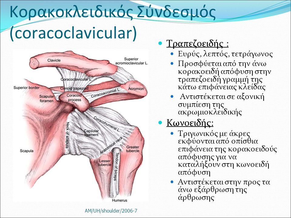 Κορακοκλειδικός Σύνδεσμός (coracoclavicular) Τραπεζοειδής : Ευρύς, λεπτός, τετράγωνος Προσφύεται από την άνω κορακοειδή απόφυση στην τραπεζοειδή γραμμ