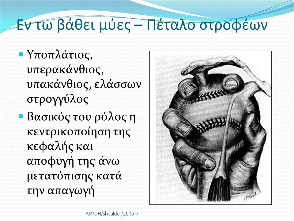 Εν τω βάθει μύες – Πέταλο στροφέων Υποπλάτιος, υπερακάνθιος, υπακάνθιος, ελάσσων στρογγύλος Βασικός του ρόλος η κεντρικοποίηση της κεφαλής και αποφυγή