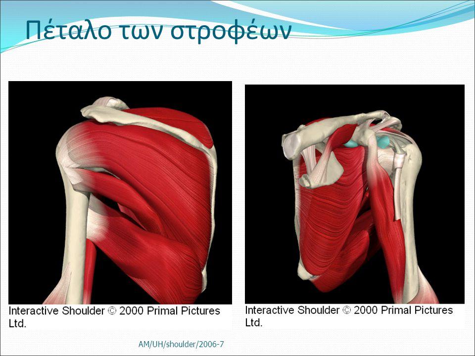 Πέταλο των στροφέων AM/UH/shoulder/2006-7