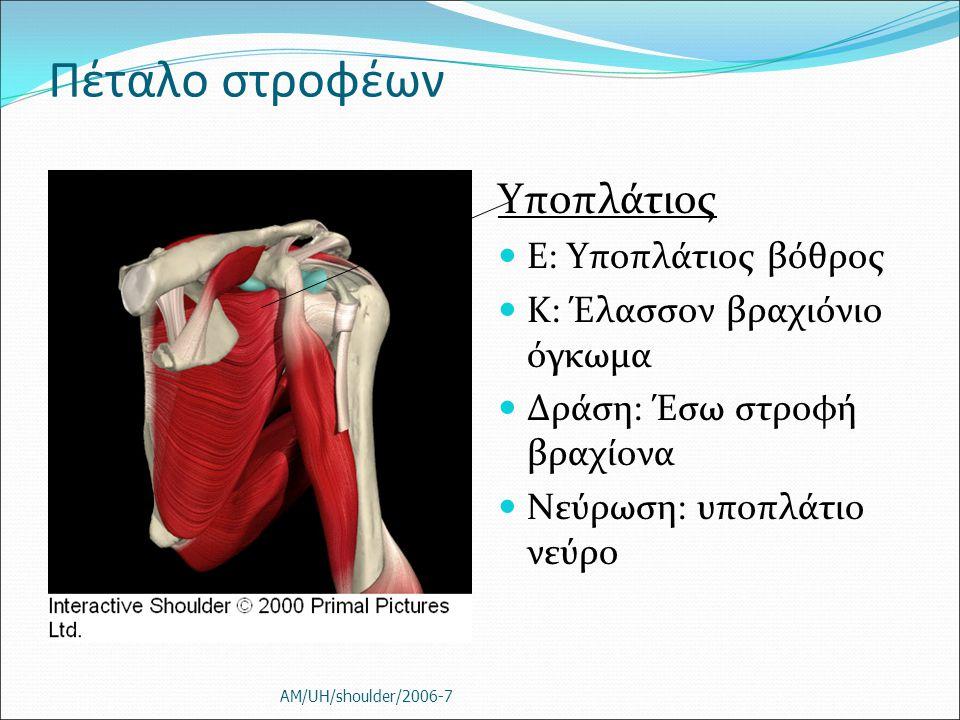 Πέταλο στροφέων Υποπλάτιος Ε: Υποπλάτιος βόθρος Κ: Έλασσον βραχιόνιο όγκωμα Δράση: Έσω στροφή βραχίονα Νεύρωση: υποπλάτιο νεύρο AM/UH/shoulder/2006-7