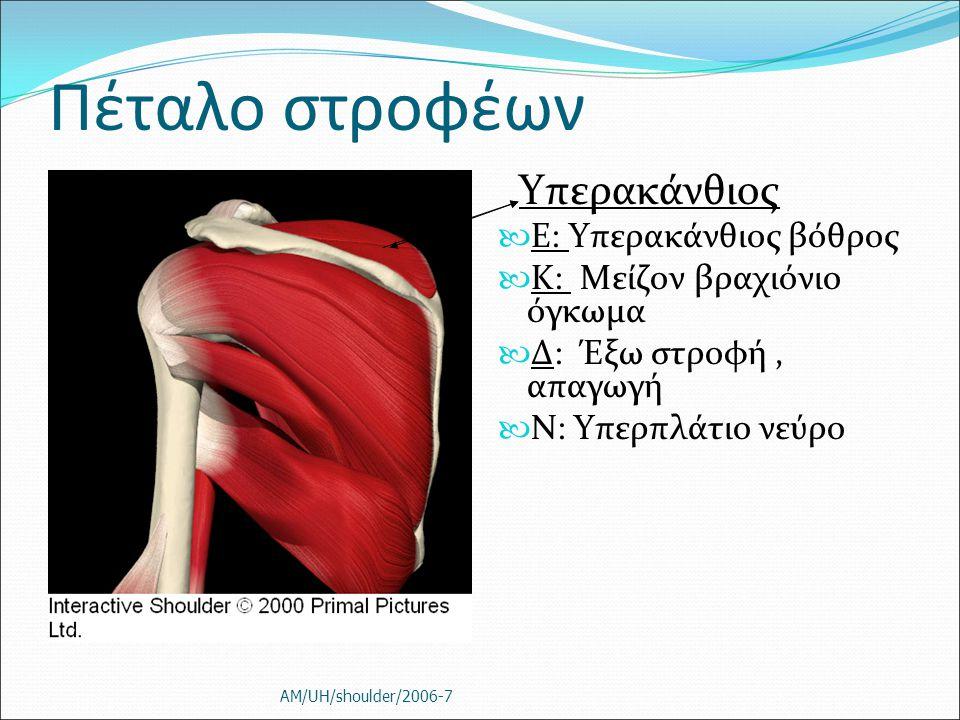 Πέταλο στροφέων Υπερακάνθιος Ε: Υπερακάνθιος βόθρος Κ: Μείζον βραχιόνιο όγκωμα Δ: Έξω στροφή, απαγωγή Ν: Υπερπλάτιο νεύρο AM/UH/shoulder/2006-7
