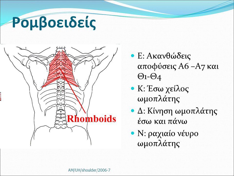 Ρομβοειδείς Ε: Ακανθώδεις αποφύσεις Α6 –Α7 και Θ1-Θ4 Κ: Έσω χείλος ωμοπλάτης Δ: Κίνηση ωμοπλάτης έσω και πάνω Ν: ραχιαίο νέυρο ωμοπλάτης AM/UH/shoulde