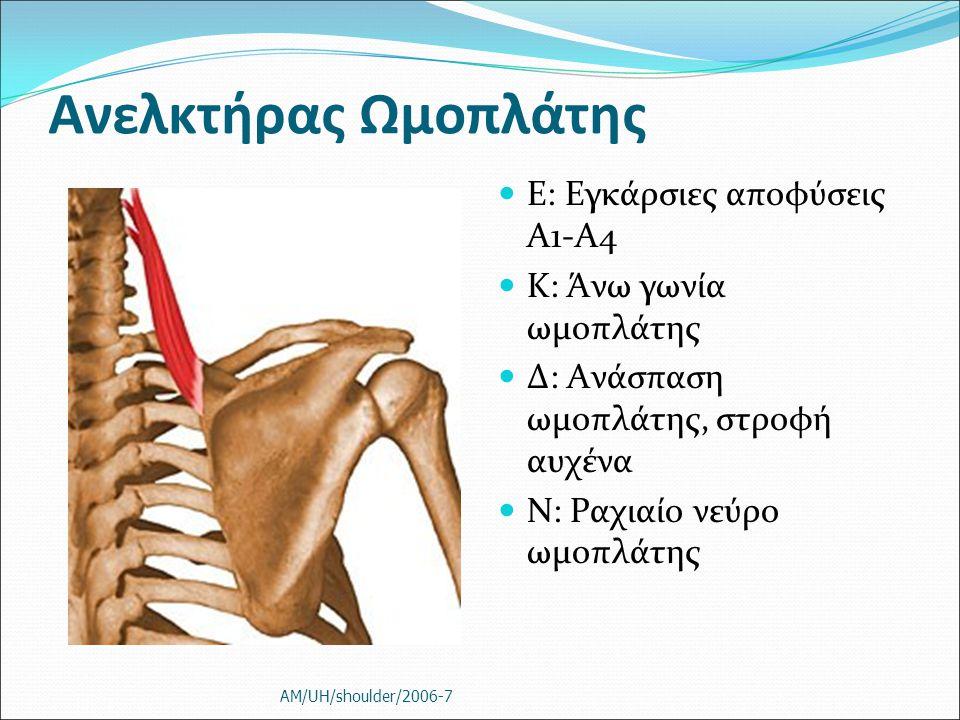 Ανελκτήρας Ωμοπλάτης Ε: Εγκάρσιες αποφύσεις Α1-Α4 Κ: Άνω γωνία ωμοπλάτης Δ: Ανάσπαση ωμοπλάτης, στροφή αυχένα Ν: Ραχιαίο νεύρο ωμοπλάτης AM/UH/shoulde