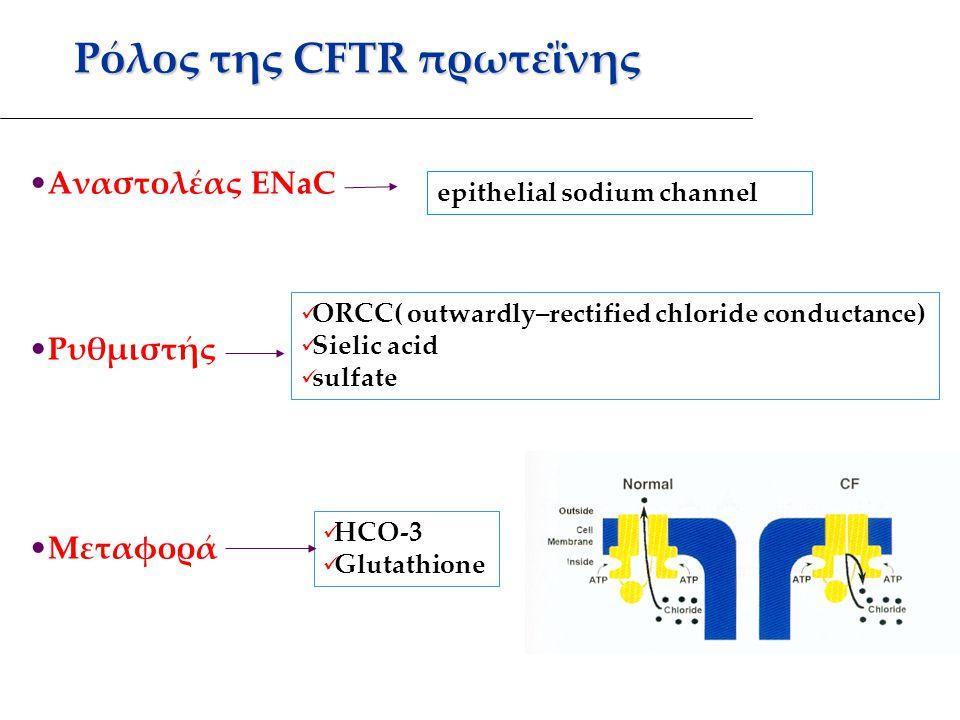 Ρόλος της CFTR πρωτεΐνης Αναστολέας ENaC Ρυθμιστής Μεταφορά epithelial sodium channel ORCC( outwardly–rectified chloride conductance) Sielic acid sulfate HCO-3 Glutathione