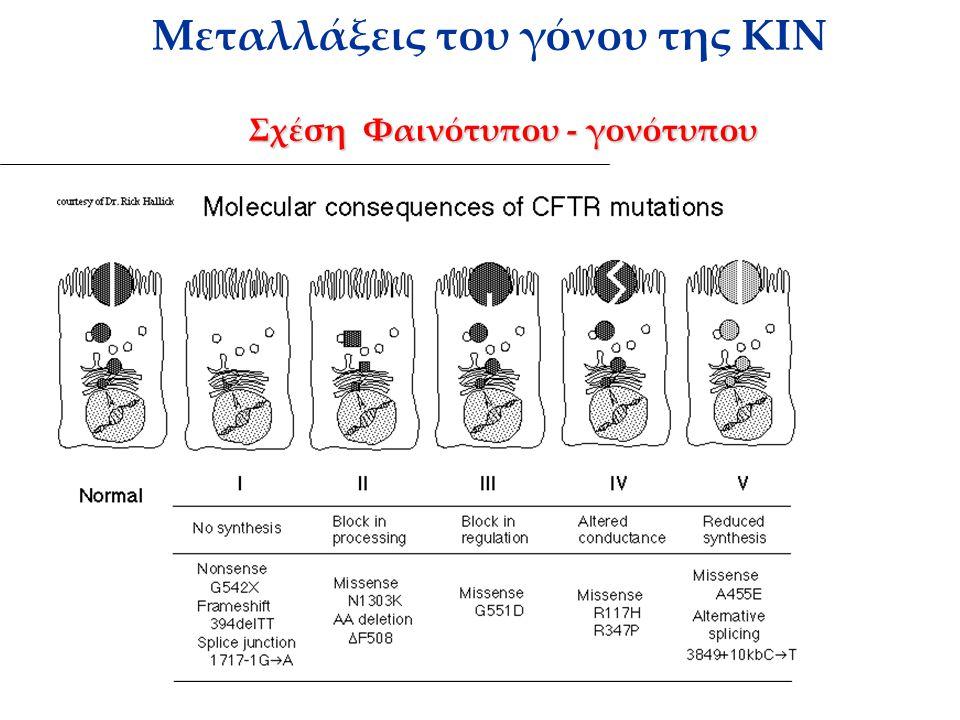 Σχέση Φαινότυπου - γονότυπου Μεταλλάξεις του γόνου της ΚΙΝ Σχέση Φαινότυπου - γονότυπου