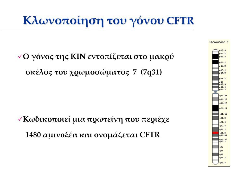 Κλωνοποίηση του γόνου CFTR Κλωνοποίηση του γόνου CFTR Ο γόνος της ΚΙΝ εντοπίζεται στο μακρύ σκέλος του χρωμοσώματος 7 (7q31) Κωδικοποιεί μια πρωτείνη που περιέχε 1480 αμινoξέα και ονομάζεται CFTR
