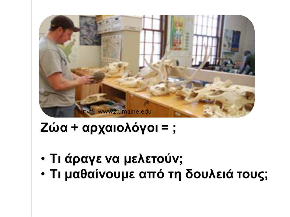 Ζώα + αρχαιολόγοι = ; Τι άραγε να μελετούν; Τι μαθαίνουμε από τη δουλειά τους; Πηγή : www2.umaine.edu