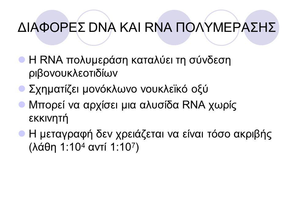 ΔΙΑΦΟΡΕΣ DNA ΚΑΙ RNA ΠΟΛΥΜΕΡΑΣΗΣ Η RNΑ πολυμεράση καταλύει τη σύνδεση ριβονουκλεοτιδίων Σχηματίζει μονόκλωνο νουκλεϊκό οξύ Μπορεί να αρχίσει μια αλυσί