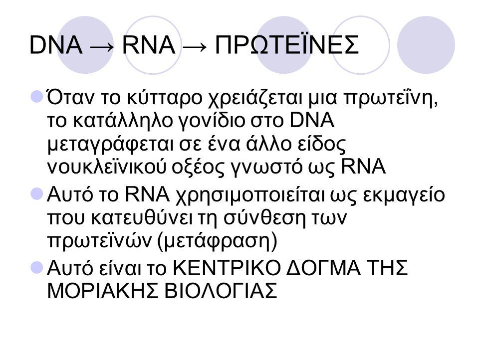 DNA → RNA → ΠΡΩΤΕÏΝΕΣ Όταν το κύτταρο χρειάζεται μια πρωτεΐνη, το κατάλληλο γονίδιο στο DNA μεταγράφεται σε ένα άλλο είδος νουκλεϊνικού οξέος γνωστό ω