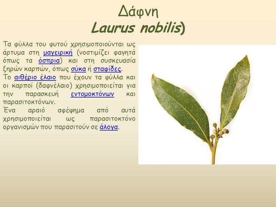 Δάφνη Laurus nobilis) Τα φύλλα του φυτού χρησιμοποιούνται ως άρτυμα στη μαγειρική (νοστιμίζει φαγητά όπως τα όσπρια) και στη συσκευασία ξηρών καρπών, όπως σύκα ή σταφίδες.μαγειρικήόσπριασύκασταφίδες Το αιθέριο έλαιο που έχουν τα φύλλα και οι καρποί (δαφνέλαιο) χρησιμοποιείται για την παρασκευή εντομοκτόνων και παρασιτοκτόνων.αιθέριο έλαιοεντομοκτόνων Ένα αραιό αφέψημα από αυτά χρησιμοποιείται ως παρασιτοκτόνο οργανισμών που παρασιτούν σε άλογα.άλογα