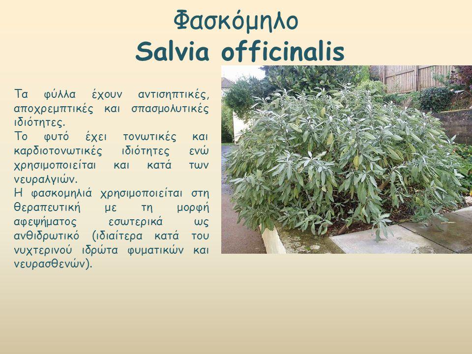 Φασκόμηλο Salvia officinalis Τα φύλλα έχουν αντισηπτικές, αποχρεμπτικές και σπασμολυτικές ιδιότητες. Το φυτό έχει τονωτικές και καρδιοτονωτικές ιδιότη