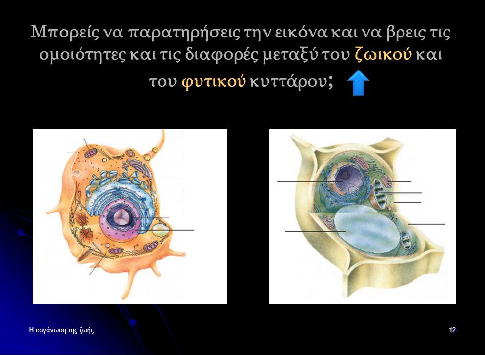 Φυτικό Κύτταρο 11 Σύμπλεγμα Goldgi Σύμπλεγμα Goldgi Αδρό Ενδοπλασματικό δίκτυο Αδρό Ενδοπλασματικό δίκτυο Πυρήνας Ριβοσώματα Μιτοχόνδριο Κυτταρικό τοί