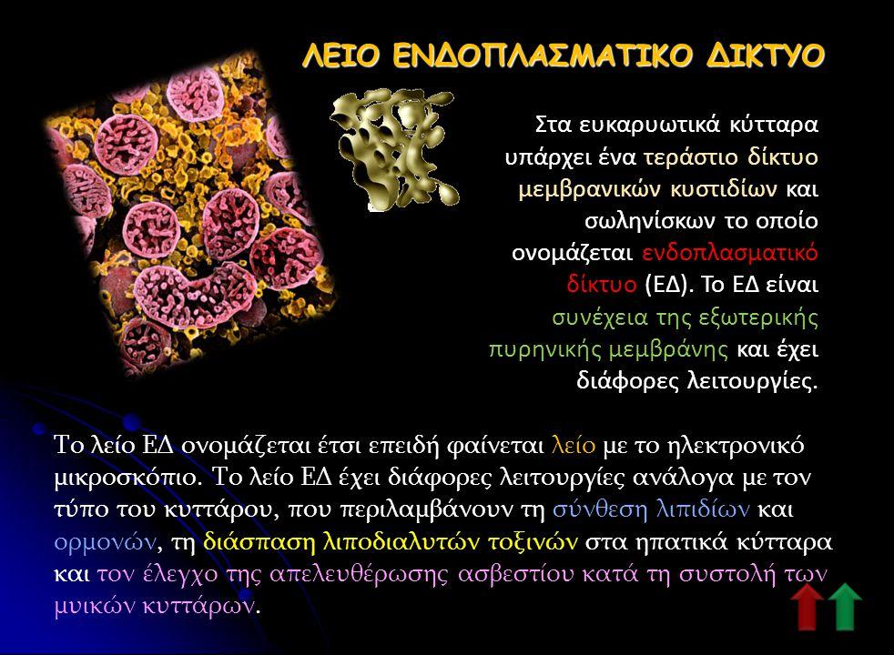 ΚΕΝΟΤΟΠΙΟ Το κενοτόπιο είναι ένας μεμβρανικός σάκος που παίζει ρόλο στην ενδοκυτταρική πέψη και την απελευθέρωση κυτταρικών αποβλήτων. Στα ζωικά κύττα