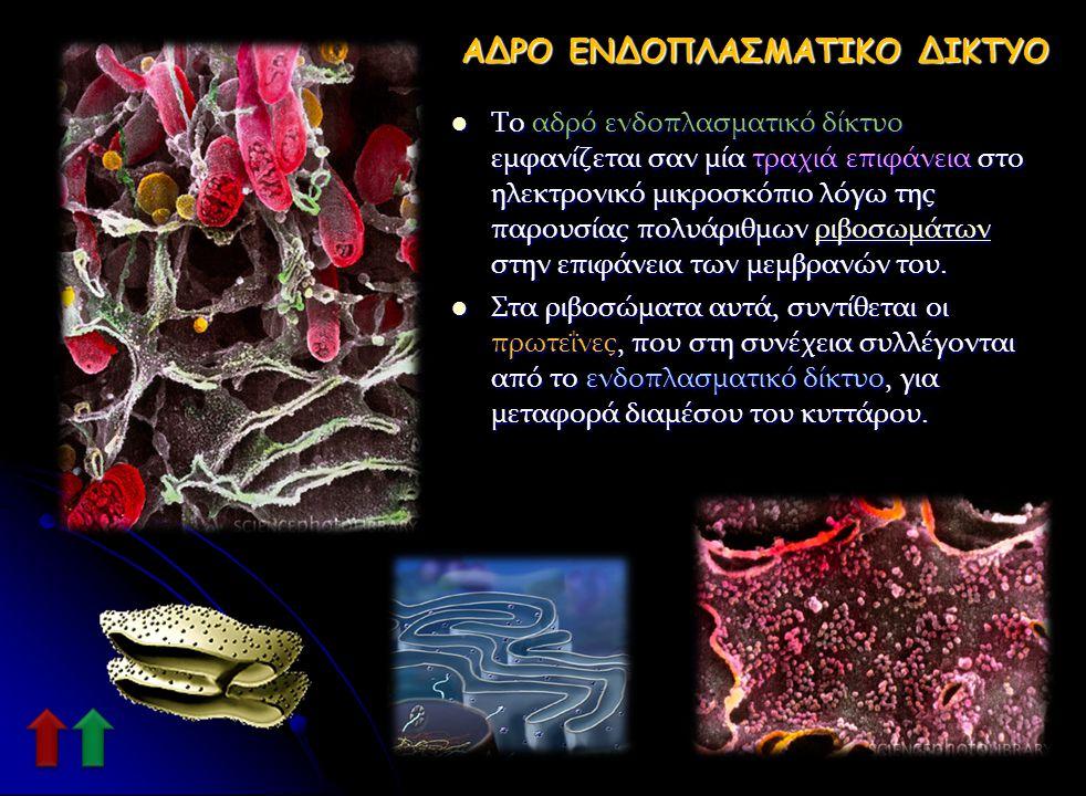 ΛΕΙΟ ΕΝΔΟΠΛΑΣΜΑΤΙΚΟ ΔΙΚΤΥΟ Το λείο ΕΔ ονομάζεται έτσι επειδή φαίνεται λείο με το ηλεκτρονικό μικροσκόπιο. Το λείο ΕΔ έχει διάφορες λειτουργίες ανάλογα