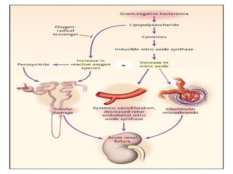 Σήψη και νεφρική βλάβη Οι κυκλοφορούσες στο αίμα ενδοτοξίνες μπορούν εντούτοις να αυξήσουν την επαγόμενη από το νεφρικό φλοιό συνθετάση ΝΟ με αποτέλεσμα αύξηση παραγωγής ΝΟ και προστατευτική δράση στο νεφρό μέσω αναστολής του σχηματισμού θρόμβων (από συσσώρευση αιμοπεταλίων) στη σπειραματική μικροκυκλοφορία.