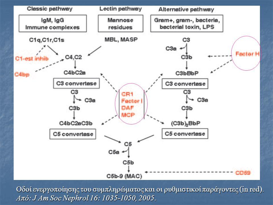 Οδοί ενεργοποίησης του συμπληρώματος και οι ρυθμιστικοί παράγοντες (in red). Από: J Am Soc Nephrol 16: 1035-1050, 2005.