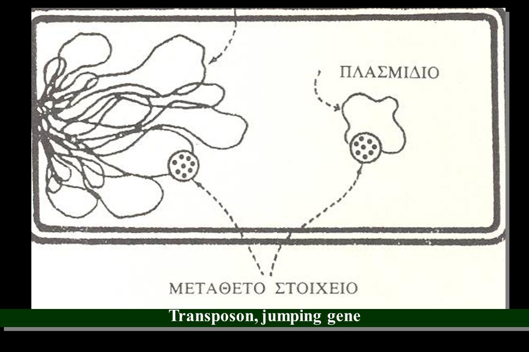 Transposon, jumping gene
