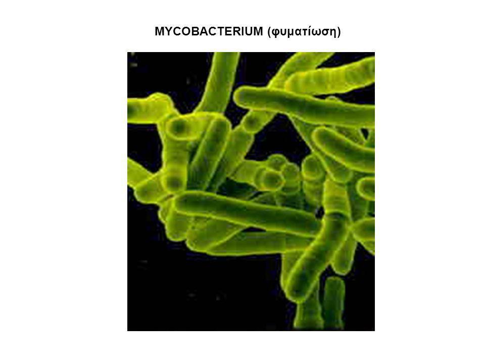 MYCOBACTERIUM (φυματίωση)