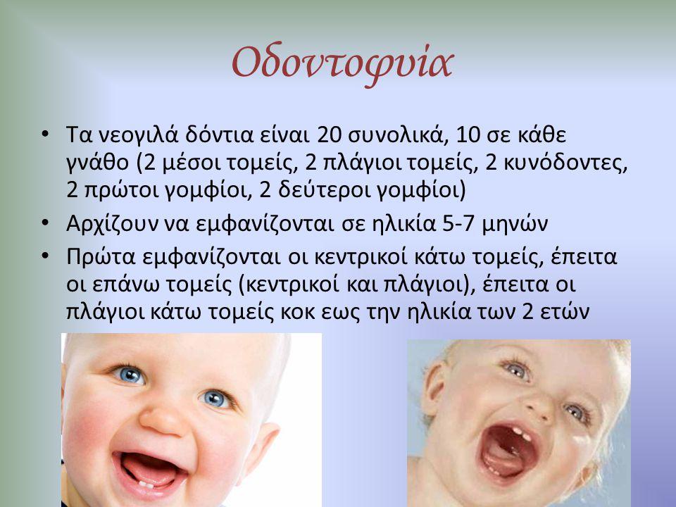Οδοντοφυία Τα νεογιλά δόντια είναι 20 συνολικά, 10 σε κάθε γνάθο (2 μέσοι τομείς, 2 πλάγιοι τομείς, 2 κυνόδοντες, 2 πρώτοι γομφίοι, 2 δεύτεροι γομφίοι