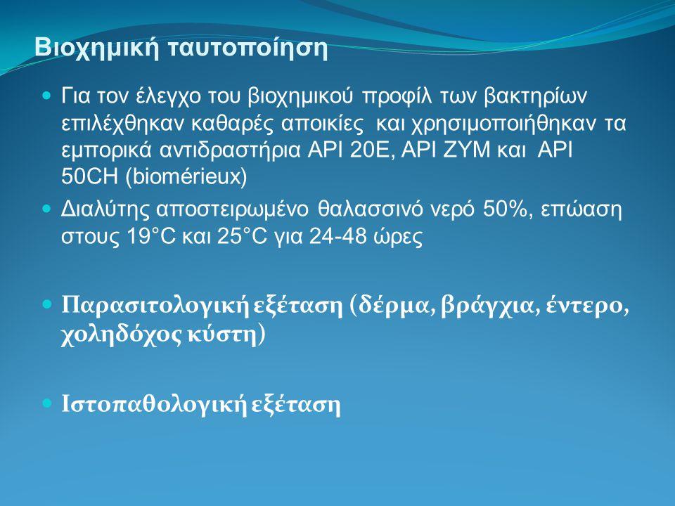 Βιοχημική ταυτοποίηση Για τον έλεγχο του βιοχημικού προφίλ των βακτηρίων επιλέχθηκαν καθαρές αποικίες και χρησιμοποιήθηκαν τα εμπορικά αντιδραστήρια API 20E, API ZYM και API 50CH (biomérieux) Διαλύτης αποστειρωμένο θαλασσινό νερό 50%, επώαση στους 19°C και 25°C για 24-48 ώρες Παρασιτολογική εξέταση (δέρμα, βράγχια, έντερο, χοληδόχος κύστη) Ιστοπαθολογική εξέταση