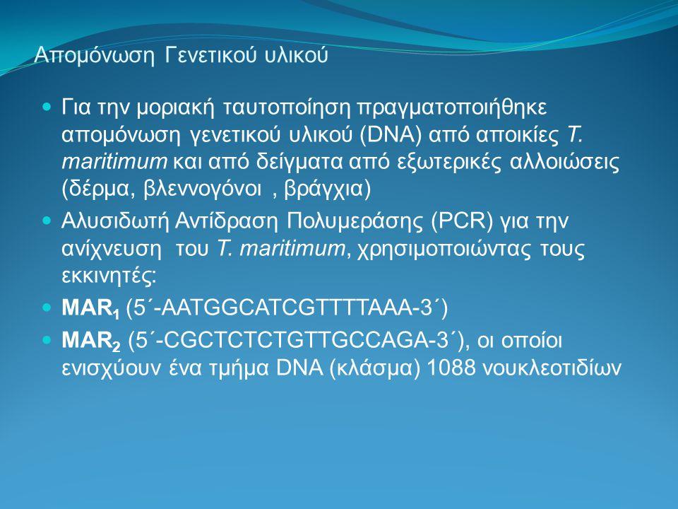 Απομόνωση Γενετικού υλικού Για την μοριακή ταυτοποίηση πραγματοποιήθηκε απομόνωση γενετικού υλικού (DNA) από αποικίες T. maritimum και από δείγματα απ