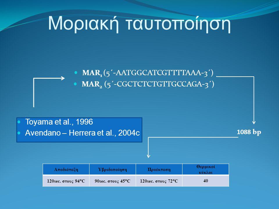 Μοριακή ταυτοποίηση MAR 1 (5΄-AATGGCATCGTTTTAAA-3΄) MAR 2 (5΄-CGCTCTCTGTTGCCAGA-3΄) Toyama et al., 1996 Αvendano – Herrera et al., 2004c 1088 bp ΑποδιάταξηΥβριδοποίησηΠροέκταση Θερμικοί κύκλοι 120sec.