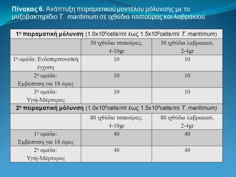Πίνακας 6. Ανάπτυξη πειραματικού μοντέλου μόλυνσης με το μυξοβακτηρίδιο T. maritimum σε ιχθύδια τσιπούρας και λαβρακιού. 1 η πειραματική μόλυνση (1.0x